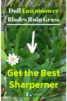 8 Best Most Effective Weed Killer for Lawns images in 2018 | Garden