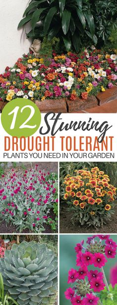 12 Drought Tolerant Flowers and Plants That'll Add Color to Your Garden Patio Plants, Outdoor Plants, Garden Plants, Outdoor Gardens, Dry Garden, Garden Shrubs, Garden Seeds, Summer Garden, Water Garden