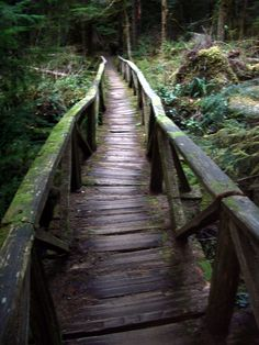 wooden bridges | ... safely across (though a few of the wooden planks were a bit wobbly