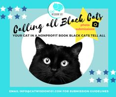 black cats_photo submissions being taken for the non-profit book Black Cats Tell All.