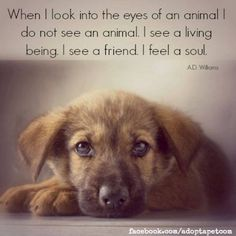Inspirational quotes about animals. Visit the Canine Support Teams to see how our service dogs give I Love Dogs, Puppy Love, Cute Dogs, Inspirational Animal Quotes, Inspiring Quotes, Amazing Quotes, Friday Quotes Humor, Animals Beautiful, Cute Animals