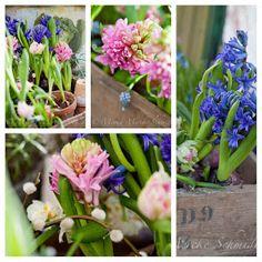 Blomsterverkstad: I love hyacinths!