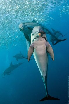 dolphins posing for the camera