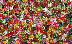 Jeremy Bortz - Just Petals