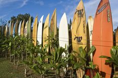 SURFBOARDS Maui, Hawaii  Colourful surfboard fence.  Credit: John Elk 111 / Lonely Planet I  Lonely Planet Images