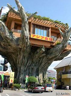 Tree-restaurant near Naha, Japan...
