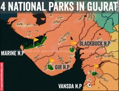 Everthing you need to know about the national park in Gujarat. Gir National park, Blackbuck National Park, Vansda National Park and Marine National Park of Kutch.