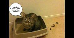 Quem tem gato sabe que eles são, ao mesmo tempo, (muito) fofos e (muito) voluntariosos. Nas redes sociais, vários desses caprichos dos felinos aparecem em piadas e tirinhas de humor. Donos vão se identificar com muitas das situações. Já quem não tem um gatinho vai perceber como às vezes pode ser difícil lidar com eles