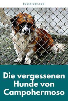 Die vergessenen Hunde von Campohermoso