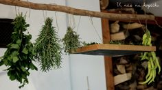 Plants, Kitchen, Blog, Cooking, Kitchens, Blogging, Plant, Cuisine, Cucina
