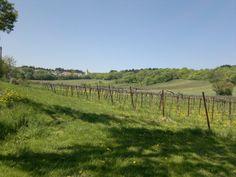Wines of the World: Weinernte 2013 Wines, Vineyard, World, Outdoor, Harvest, Outdoors, Vine Yard, Vineyard Vines, The World