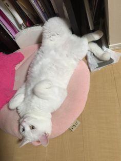 ふにゃ  #cat
