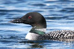 oh how I miss the northern lakes and the loons call...