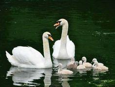 Birds, Ducks, Classroom, Animals, Class Room, Animales, Animaux, Bird, Animal