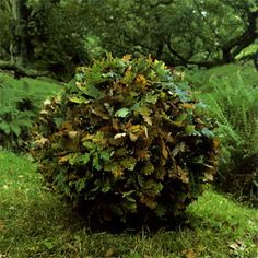 Andy Goldsworthy Art | Andy Goldsworthy – Large fallen oak tree used leaves with branches ...