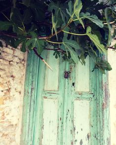 Favourite fruit tree part 1 #fig #figtree #green #nature #tree #leaves #fruit #summer #door #architecture #house #traditional #island #symi #symiisland #dodekanese #tb #holidays #greece #visitgreece #lock