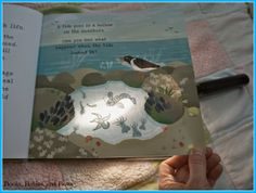 """Books, Babies, and Bows:  Worth reading the review of a non fiction book that you use a torch to find hidden things in the """"Secrets of the seashore""""."""