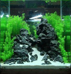 underwater sand fall aquarium - Cerca con Google