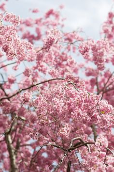 Finally, blossoms have arrived in Ontario!