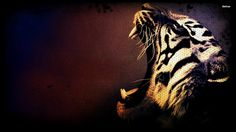 Pin by hilko rensel on roaring art pinterest tiger wallpapers free tiger desktop backgrounds hd tiger backgrounds for computer wallpapers altavistaventures Image collections
