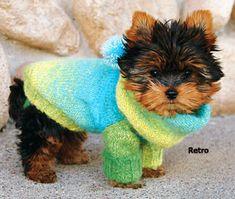 .sweater pooch