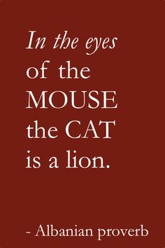 In the eyes of the mouse the cat is a lion. - Albanian proverb #perspective #quotes