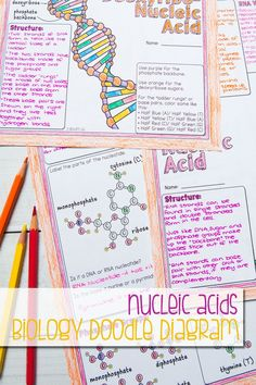 Fantastic illustrated guided notes all about nucleic acids, nucleotides, parts of nucleotides, and the role of DNA and RNA. High School Biology, High School Science, Teaching Science, Student Learning, Chemistry Notes, Physics Notes, Science Notes, Dna And Genes, Transcription And Translation