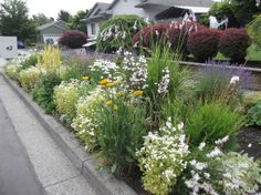 """Now there are """"planned"""" hell strip gardens offered by many nurseries."""