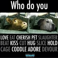 all living beings deserve to live.....not be used as commodity, entertainment, clothing, etc...