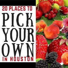 Pick your own strawberries, blackberries, blueberries, figs, peaches… Houston Food, Houston Tx, Houston Living, Pick Your Own Fruit, Stuff To Do, Things To Do, Houston Street, Portrait Studio, Moving To Texas