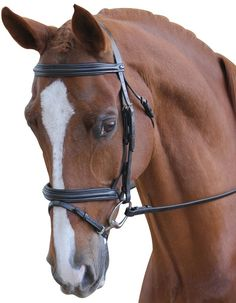 The Collegiate Raised Flash Bridle is a smart Hanoverian bridle with a nappa padded headpiece for added comfort for your horse. Made from the finest quality leather and highly polished stainless steel fittings and rubber reins for a non-slip grip. Horse Bridle, Horse Gear, Riding Hats, Horse Riding, Equestrian Supplies, Horse Rugs, Stainless Steel Fittings, Equestrian Outfits, Saddles
