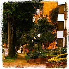 """Between lights and trees @igerscolombia #instagramyourcity Bogotá @socialmediaweek @smwbog #Bta2600MtsMasCercaDeLasEstrellas"" by @adrylicht"