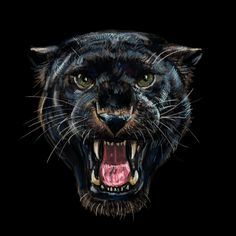 Find Roaring black panther on black background,digital painting stock illustrations and royalty free photos in HD. Explore millions of stock photos, images, illustrations, and vectors in the Shutterstock creative collection. Black Panther Images, Black Panther Drawing, Black Panther Cat, Black Panther Tattoo, Black Background Painting, Background Drawing, Herren Hand Tattoos, Tiger Sketch, Big Cat Tattoo