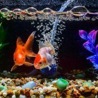 Parmezános-paradicsomos tészta csőben sütve Recept képpel - Mindmegette.hu - Receptek Rigatoni, Fish, Pets, Animals, Animals And Pets, Animales, Animaux, Animal, Animais