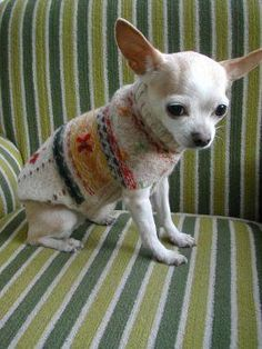 DIY SWEATERS : DIY a Recycled Dog Sweater