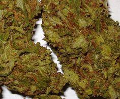 Pineapple Kush Marijuana