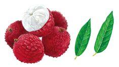 アサヒの缶チューハイ「Slat(すらっと)期間限定南国ライチサワー」の広告イラストを担当しました。 販売店などでポップとして展開されています。 Kumamoto, Raspberry, Fruit, Illustration, Design, Illustrations, Raspberries