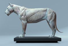 """Draw Lions rhubarbes: """" ArtStation - Lion anatomy, by Maria Panfilova More on RHB_RBS """" - Lion Anatomy, Animal Anatomy, Anatomy Art, Elephant Anatomy, Horse Anatomy, Anatomy Study, Anatomy Drawing, Big Cats, Cats And Kittens"""