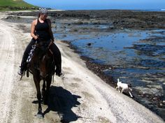 Far North Adventures - Horse trekking in New Zealand's Far North. ♥ Pinned with gratitude by www.DressageWaikato.co.nz.