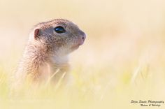 Siesel by StijnSmits #animals #animal #pet #pets #animales #animallovers #photooftheday #amazing #picoftheday