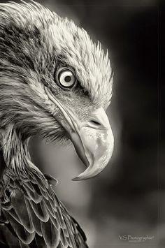 Macro Photography, Wildlife Photography, Animal Photography, White Photography, All Animals Photos, Animals And Pets, Eagle Pictures, Animal Pictures, Beautiful Birds