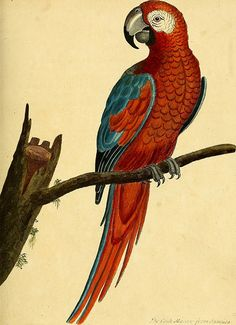 """page 64 of """"A natural history of birds : illustrated with a hundred and one copper plates, curiously engraven from the life"""" Bird Illustration, Illustrations, Botanical Illustration, Historia Natural, Bird Types, Nature Drawing, Book Images, Vintage Birds, Fauna"""