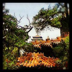 Rooves in the garden, Forbidden City, Beijing