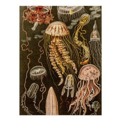 Vintage Jellyfish Antique Jelly Fish Illustration Posters