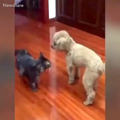 Cute, fluffy, adorable, funny Dogs and Puppies videos Animal Humour, Funny Animal Memes, Cute Funny Animals, Dog Memes, Funny Animal Pictures, Cute Baby Animals, Funny Dogs, Cute Cats, Cat Vs Dog