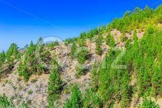 Qdiz Stock Photos Fir Trees on Mountain Landscape,  #blue #Canary #fir #green #Hill #island #landscape #mountain #nature #rock #sky #Spain #stone #summer #Tenerife #tree