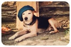 This was my childhood dog. He was my best friend and can never be replaced. I miss him a lot. But how cool does he look in his beret? Jimmy Jones, My Best Friend, Best Friends, I Miss Him, Jack Russell Terrier, Family Dogs, Beret, My Childhood, Husky