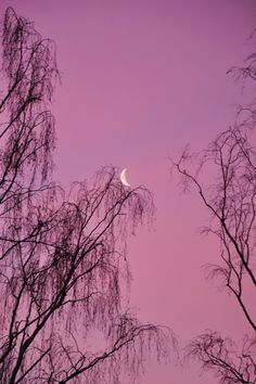 Purple Crescent, Germany, by me, my sis and I, on flickr.
