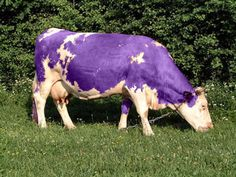 i had never seen a purple cow. i never hoped to see one. So when it comes to purple cows, i'd rather see than be one!