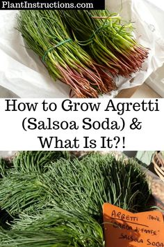 How to Grow Agretti